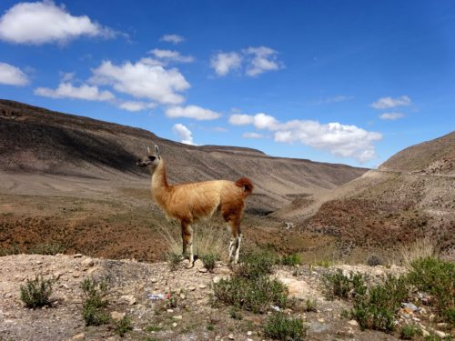 Peru's Changing Landscapes and other misadventures